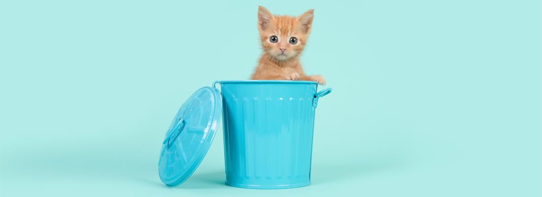 藏在藍色迷你垃圾箱中的可愛小貓